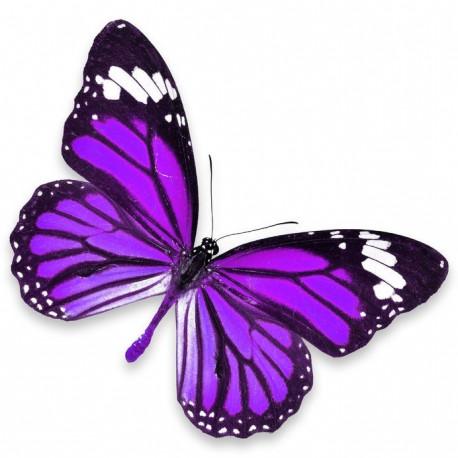 Soin Butterfly